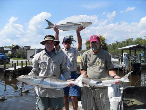 Fishing everglades city fl contact info for Everglades city fishing